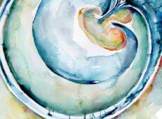 Embriologia Vivencial I Moviment · (Body-Mind Centering®)